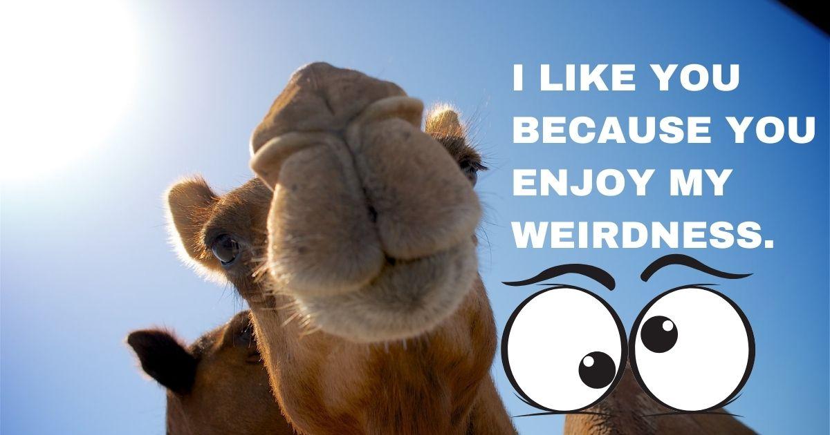 I like you because you enjoy my weirdness