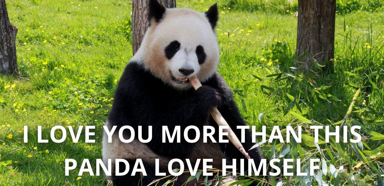 I love you more than This Panda Love Himself