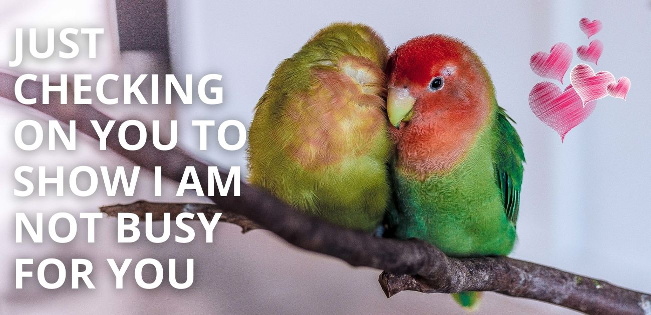 Just checking on you to show I am not busy for you