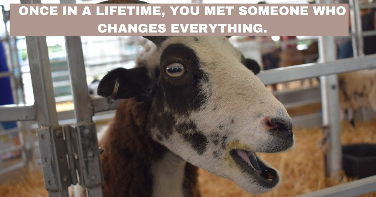 Once in a lifetime you met someone who changes everything
