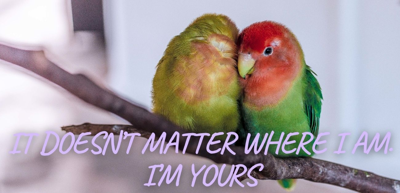 It doesn't matter where I am. I'm yours