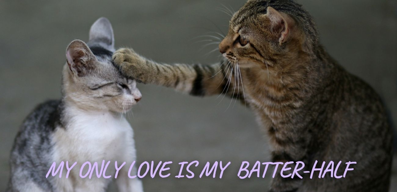 My only love is my batter-half